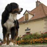 Hausbooturlaub in Burgund/Frankreich Burgundkanal / Scheluse